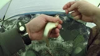 Зимняя рыбалка в новокосино
