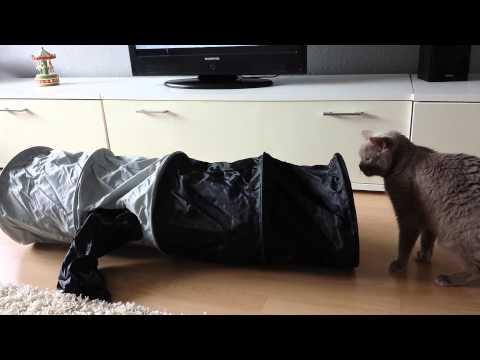 BKH Katzen im neuen Rascheltunnel