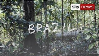 Surge in deforestation in Amazon rainforest   Hotspots