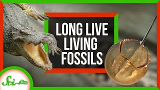 Living Fossils Are Dead! Long Live Living Fossils