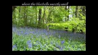 The Bluebells of Scotland at Dunninald