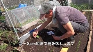 菜園だより180326ゴボウ種まき・草刈り