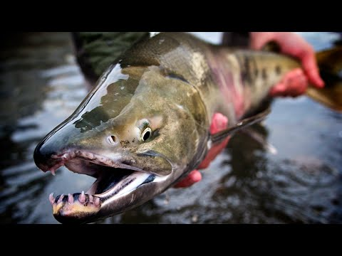 The AK Way - Amazing Alaska Fly Fishing!