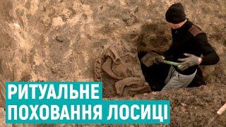 Под Ровно найден скелет самки лося бронзового века