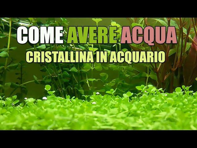 Come avere acqua cristallina in acquario - chiarificatore - argilla verde