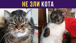 Приколы и мемы. Не зли кота | Мемозг #56