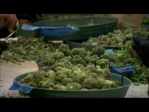 NY Legalizing Marijuana