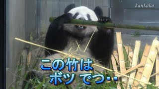 2020.1.24 シャンシャン よく食べ よく寝て ③(Giant panda Xiang Xiang ate a lot.And she has slept well. Part3)
