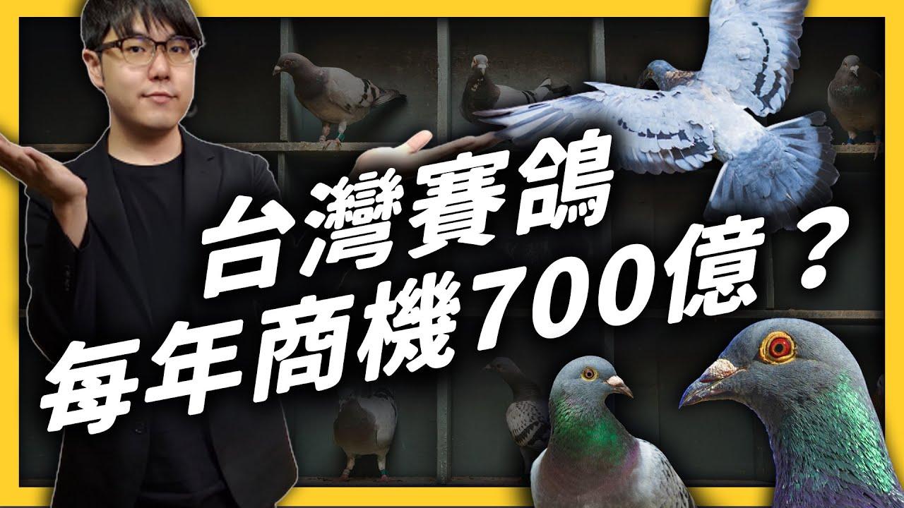 一隻鴿子身價破千萬!商機蓬勃的台灣賽鴿,在國際上卻陷入了形象危機?《 台味七七 》EP018|志祺七七