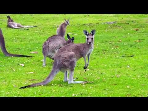 Australia Cruise 2018