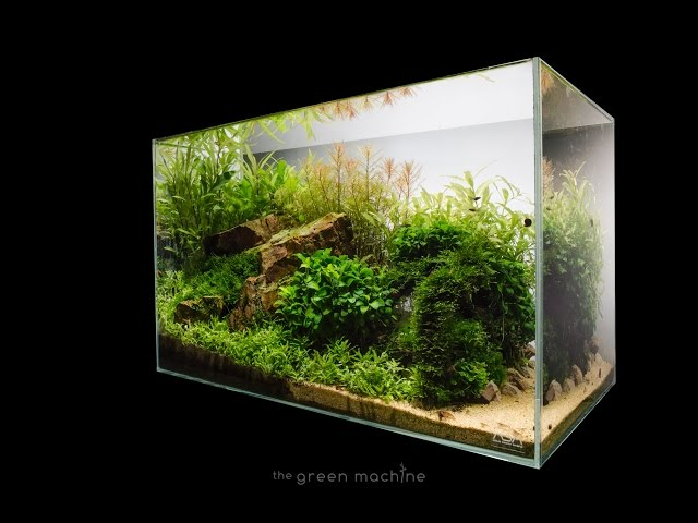 Escarpment Nature Aquarium by James Findley - Step by Step