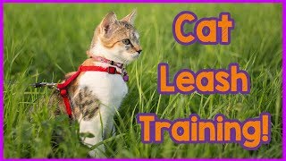 How to Train Your Cat to Walk on a Leash! Leash Training for Your Cat! Teach an Old Cat New Tricks!
