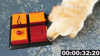 *ADVANCED* DOG BRAIN TRAINING GAMES - SCS #112