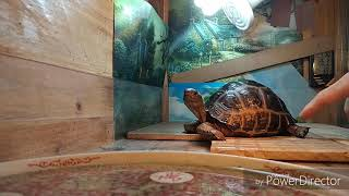Touch And Touch , Interact With The Tortoise 與龜互動