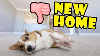 My Corgi Dog REJECTS our NEW HOME 👎|| Life After College: Ep. 627