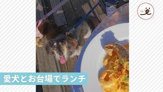 愛犬と一緒に行ける、お台場のレストランでゆったりとしたランチ【 PECO TV 】