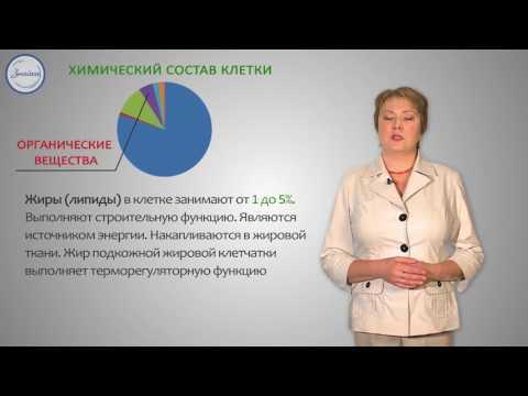 Химический состав и жизнедеятельность клетки