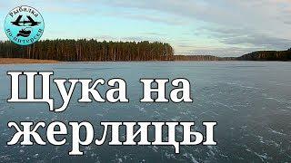 Ловля щуки зимой на жерлицы в ленинградской области