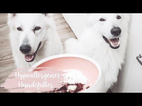 Hundefutter - Hypoallergenes Hundefutter für futtersensible Hunde