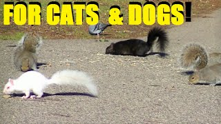 Entertainment Videos For Cats and Dogs To Watch - Squirrel and Bird Fun
