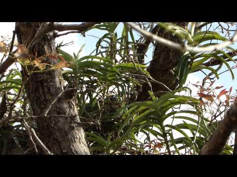 Para sa pag-iwas ng kuko halamang-singaw lunas