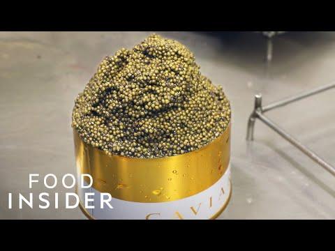 Bên trong trang trại nuôi và sản xuất trứng cá Caviar lớn nhất Châu Âu