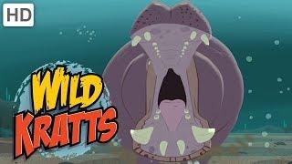 Wild Kratts - Massive Mammals | Kids Videos