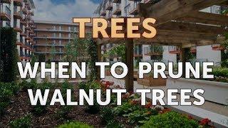 When To Prune Walnut Trees