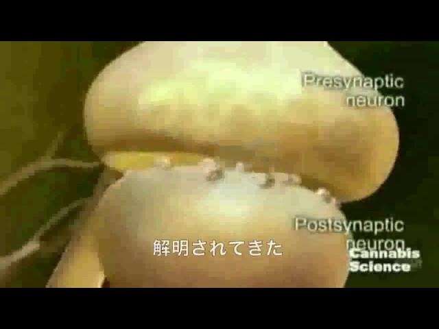 CBDが3歳の少女を救った~佐藤教授のCBD説明付き~