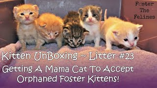 Kitten UnBoxing #23 ~ Mama Cat Loves Orphaned Foster Kittens ~ Litter #23