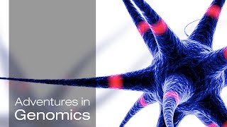 The Singular Neuron: Understanding Complex Biology, One Cell at a Time