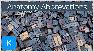The 31 most common medical terminology (anatomy) abbreviations | Kenhub