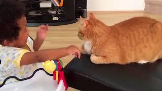Смешные кошки до слез Смешное видео до слез 2018 #12 (Котики Без монтажа)