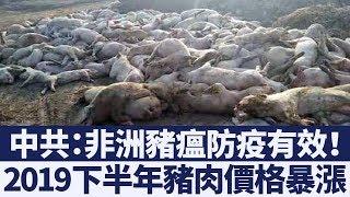 非洲豬瘟衝擊大 2019下半年中國豬肉價格飆漲|新唐人亞太電視|20190424