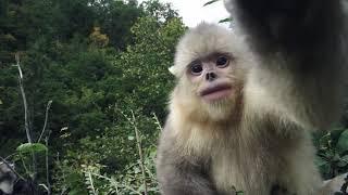 Tráiler Inglés Back From the Brink: Saved From Extinction