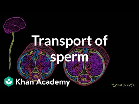 Seems male sperm ejactulation