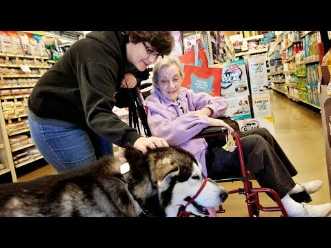 Malamute Goes Shopping!! Who is this Dog???????