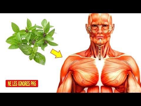 Cara pakai corps mince à base de plantes kapsul