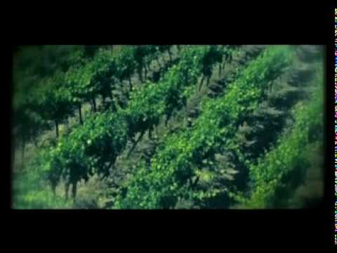 Vasco Rossi - Vivere una favola