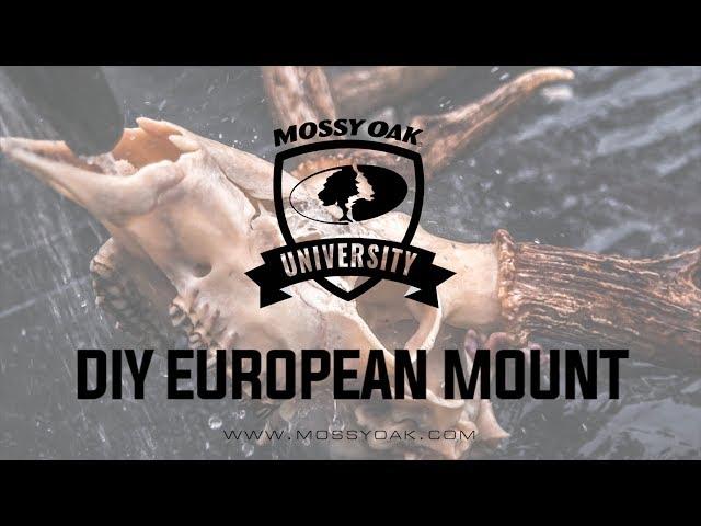 Diy European Mount Mossy Oak