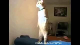 Кошки Просто  Умора!!!