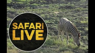 safariLIVE - Sunset Safari - May, 27. 2018