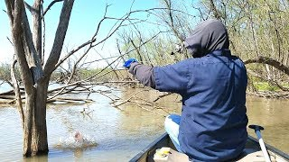 Crappie Fishing Tree Dipping. EP 53