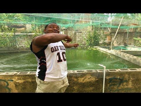 peces goldfish que se volvieron monstruo su primero huevos