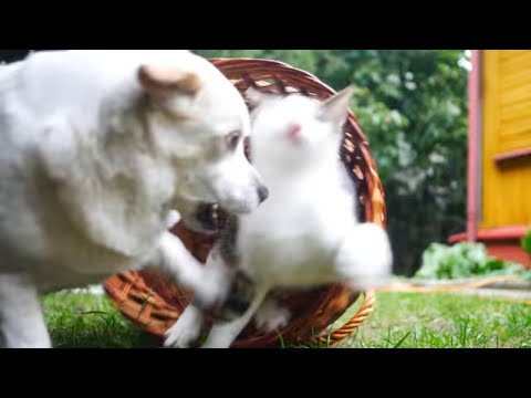 Talking Cats In The Grass 4k UHD 🐈 🐱 Bike Rides - The Green Orbs