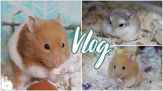 hamster vlogs and more - 免费在线视频最佳电影电视节目