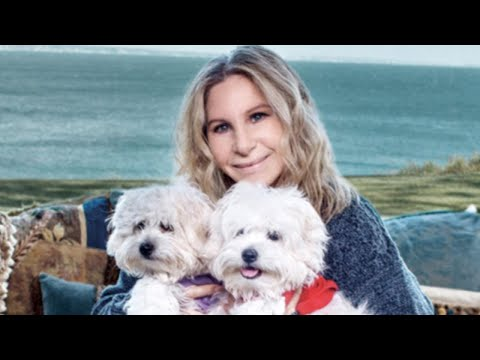 How Pet Owners Like Barbra Streisand Clone Their Dogs