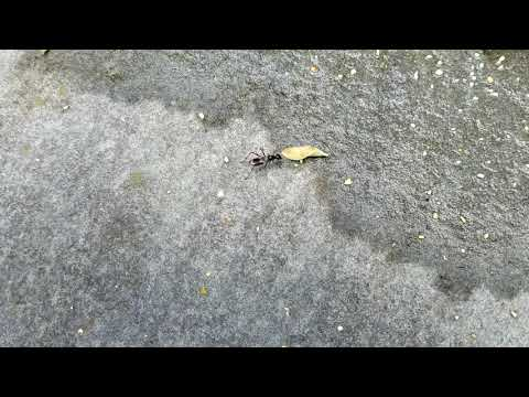 Up Close and Personal with Carpenter Ants in Red Bank, NJ
