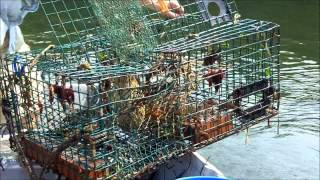 How to Set and Check Lobster Traps