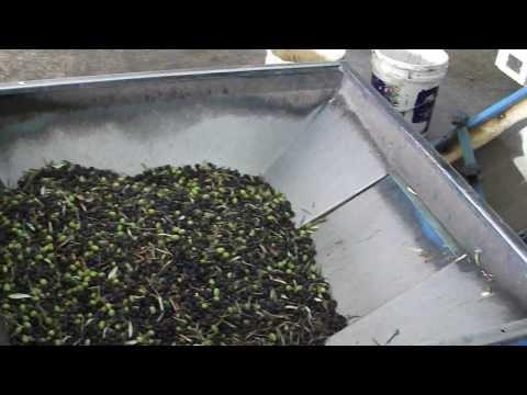 Video Pengolahan minyak zaitun 2